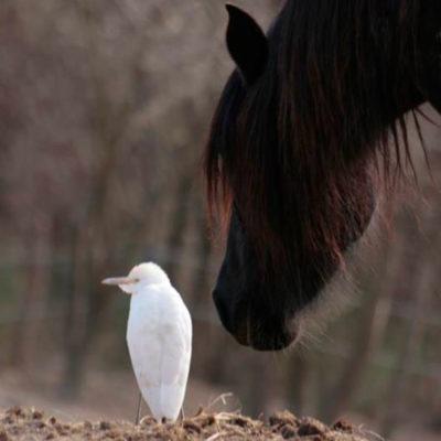 Onda-e-Uccello---Encounters