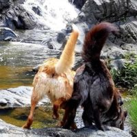 Zoa and Shiva exploring by the waterfall